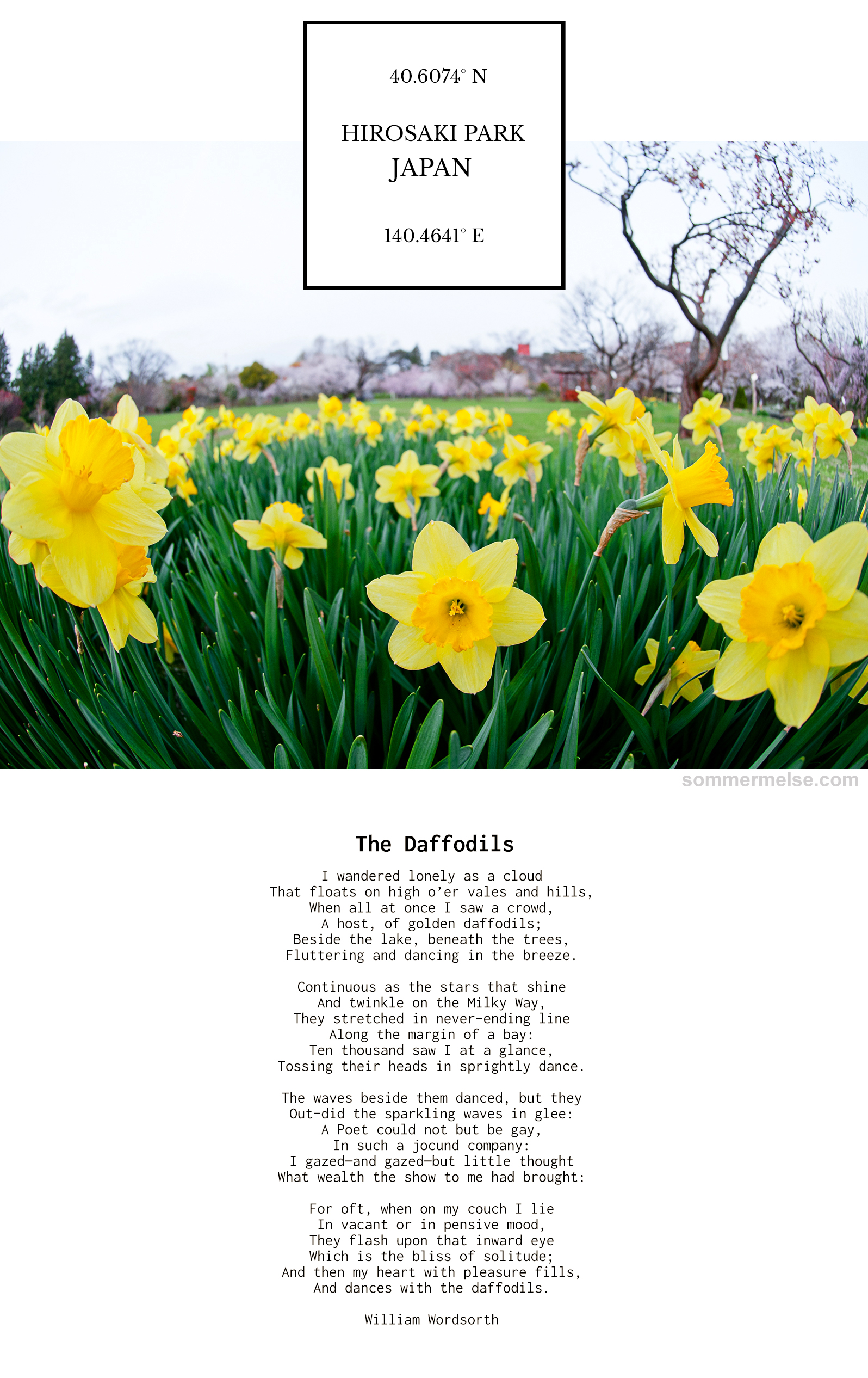 33_finding_wonder_the_daffodils_william_wordsworth